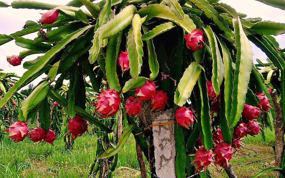 3 loại trái cây giúp làm sạch khoang miệng