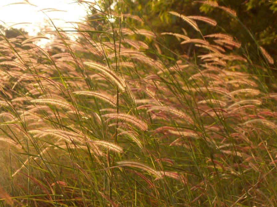 Gió lớn mới biết cỏ cứng